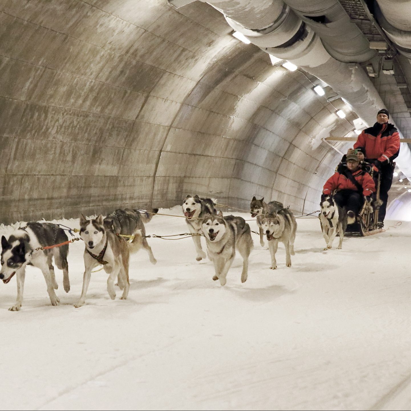 Huskies in Ski Tunnel